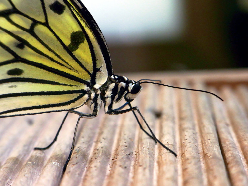 Sentosa has wildlife on display at the Butterfly Park