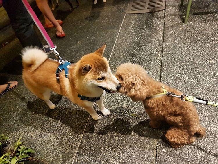 Pet friendly cafes