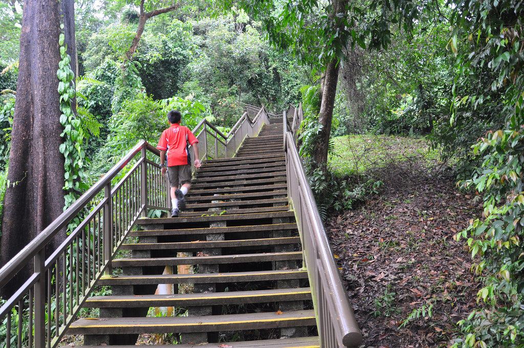 """marang trail southern ridges trek nature trail singapore"""