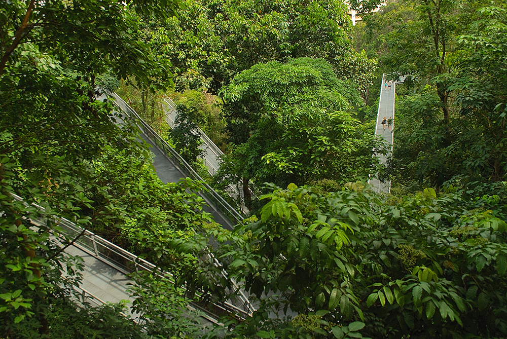 The elevated forest walk at Southern Ridges lets you take a closer look at nature