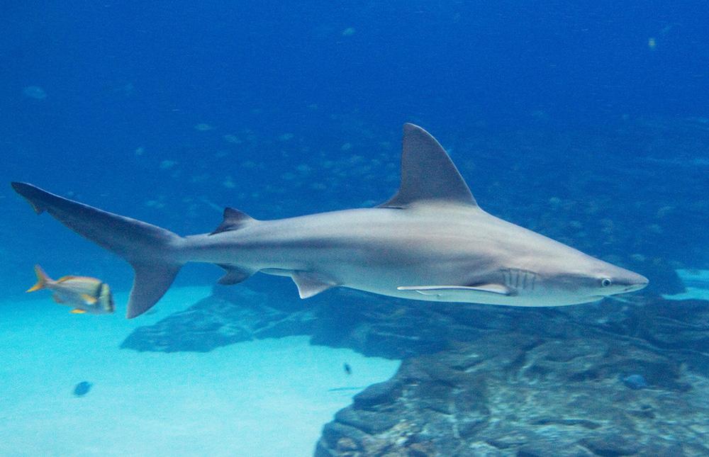 """""""diving, shark, fun, singapore, aquarium, exciting activities singapore"""""""