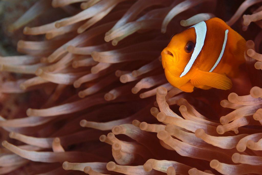Spot a clown fish at Pulau Hantu Besar