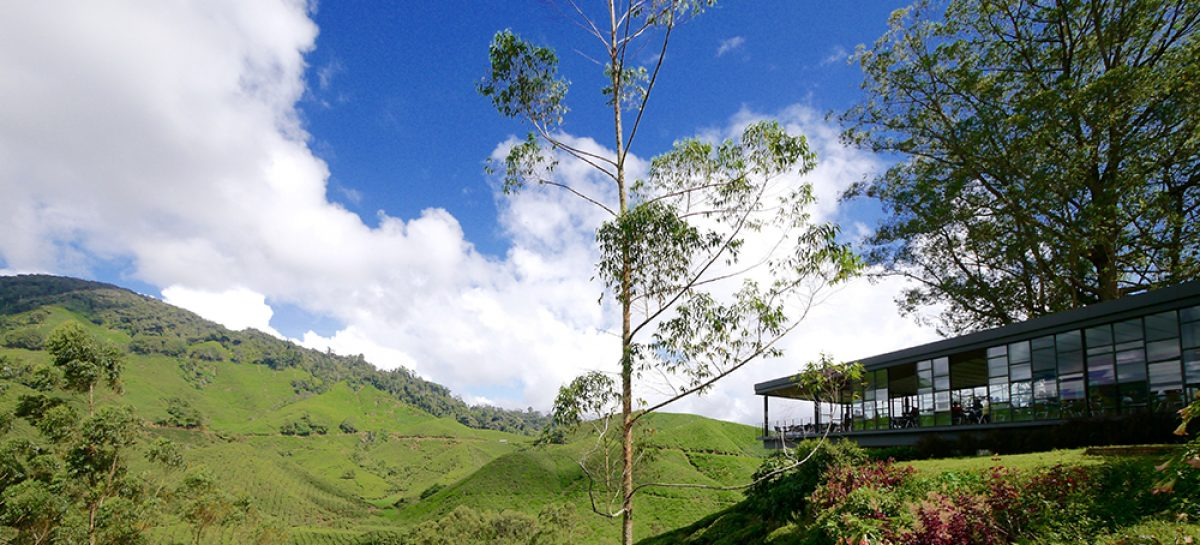 Escape the heat in cool, scenic Cameron Highlands