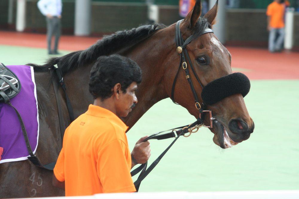 """horses warming up horse riding singapore kranji racecourse singapore turf club"""