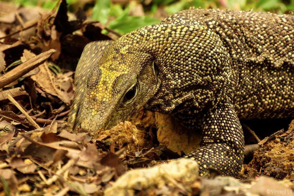 """wildlife in singapore, singaporenbeyond, adventure, nature, park"""