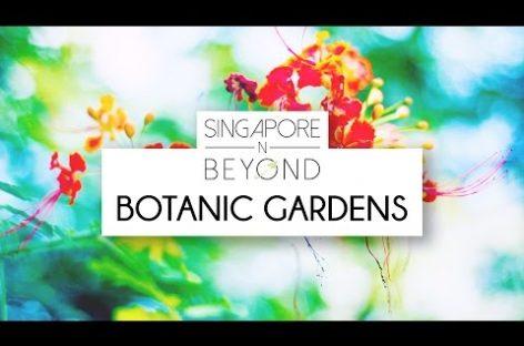 [VIDEO] Singapore Botanic Gardens