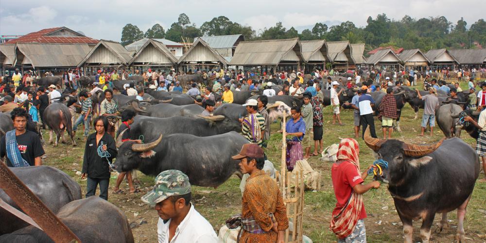 Tana Toraja Pasar Bolu Market