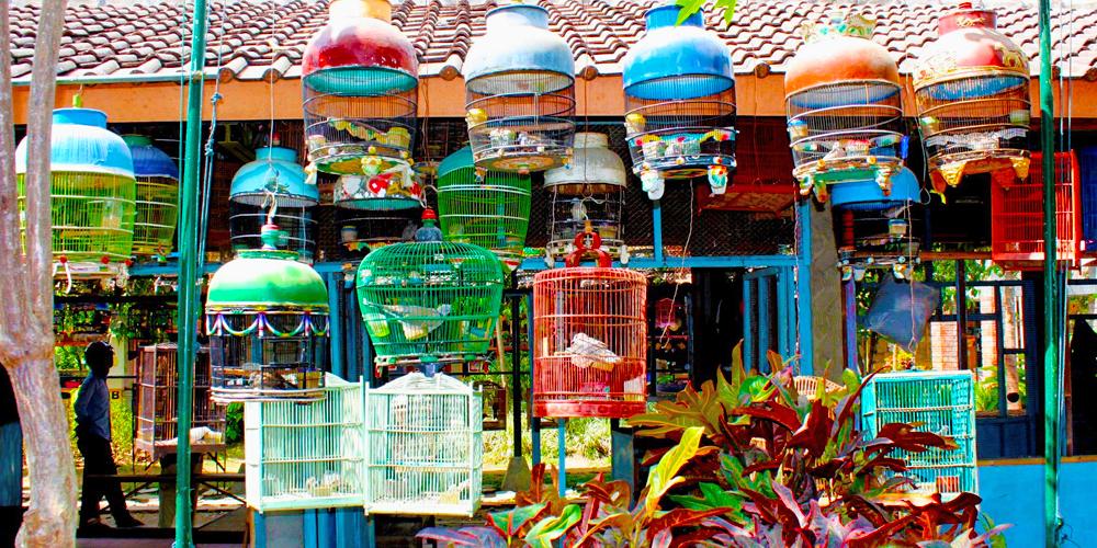 Bird_Market_Building_in_Yogyakarta_6265682015