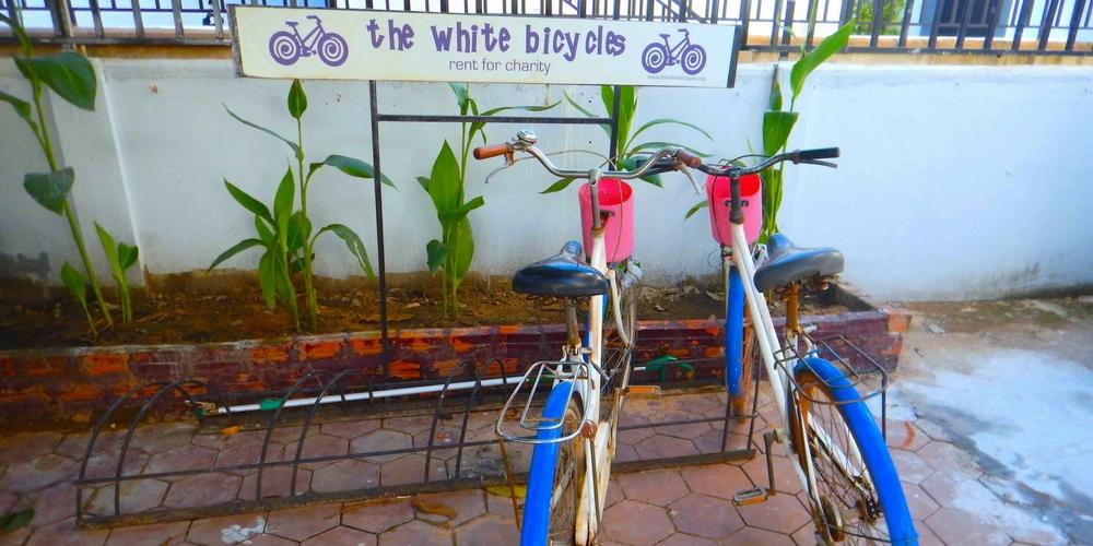 Baby Elephant White Bicycles