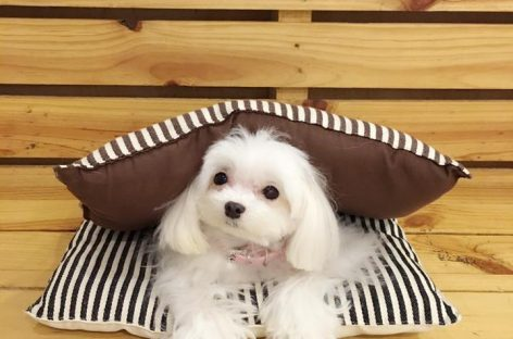 5 Animal Cafes in Singapore To Pet a Fluffy Friend