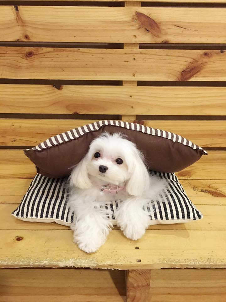 pet cafes in singapore