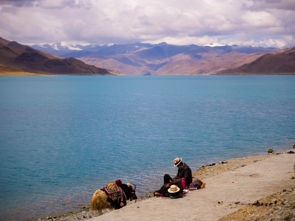 herder-and-yak-ar-yamdrok-lake