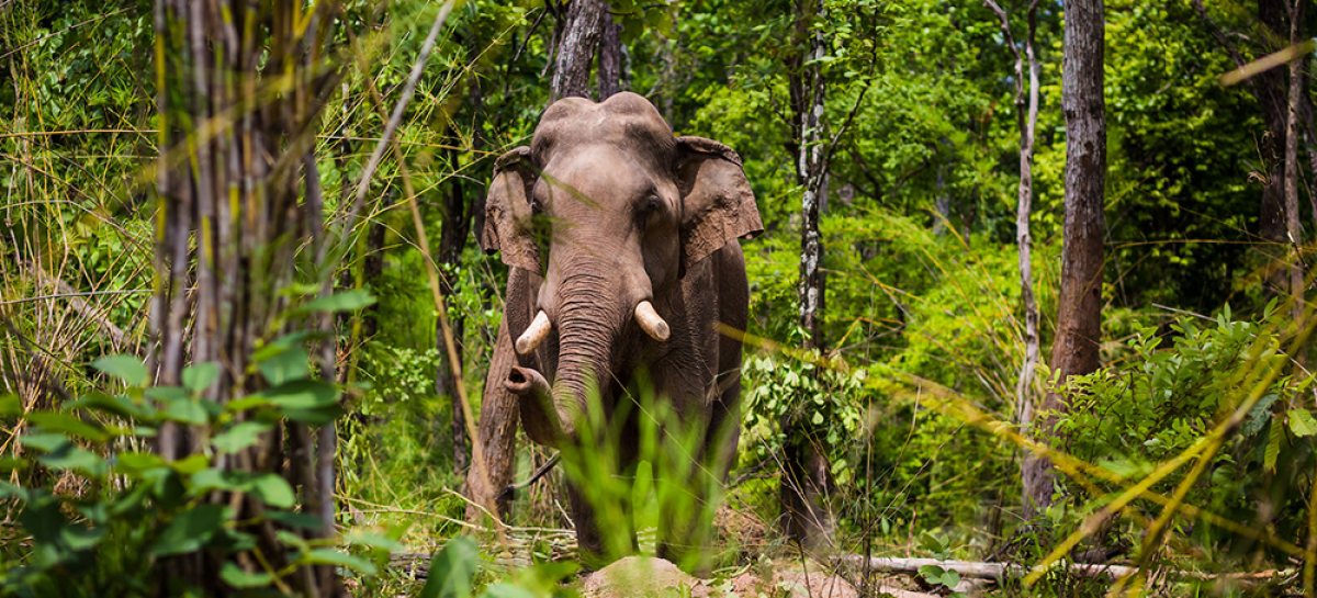11 days in the Wild East of Cambodia - your full itinerary