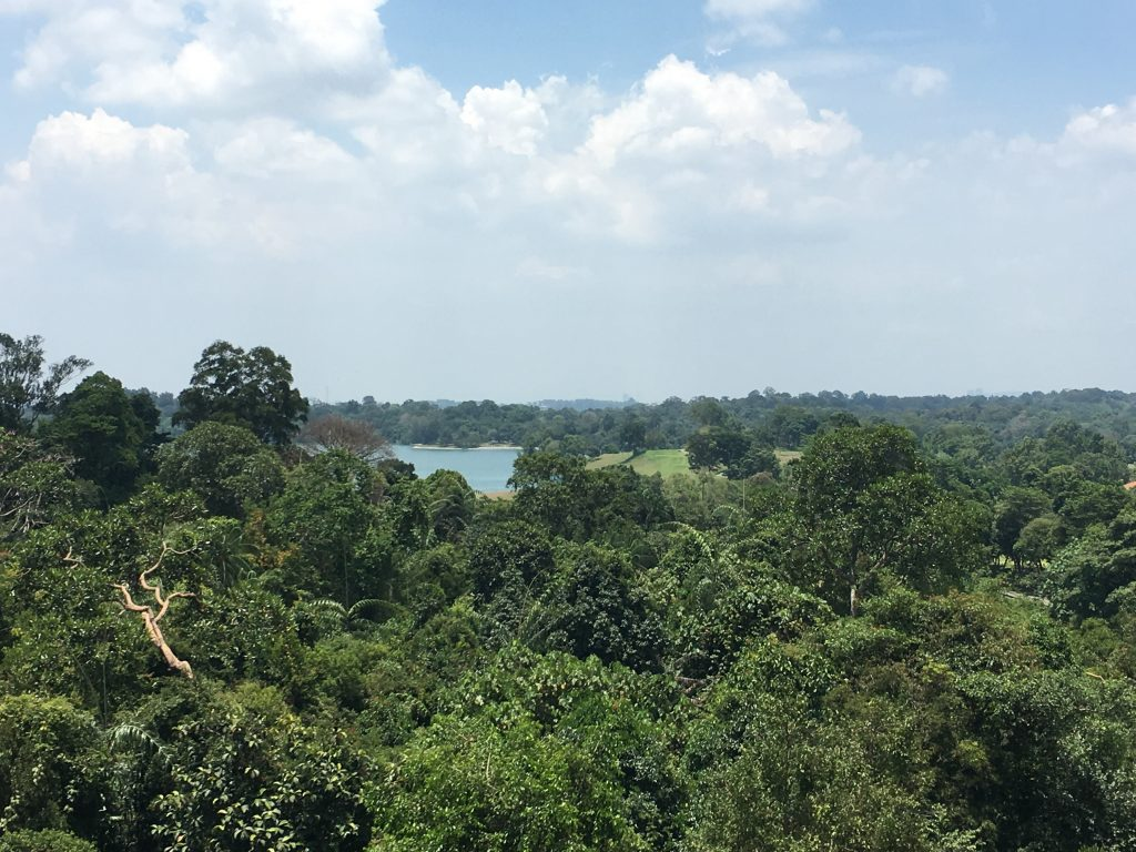"""View from MacRitchie suspended bridge'"