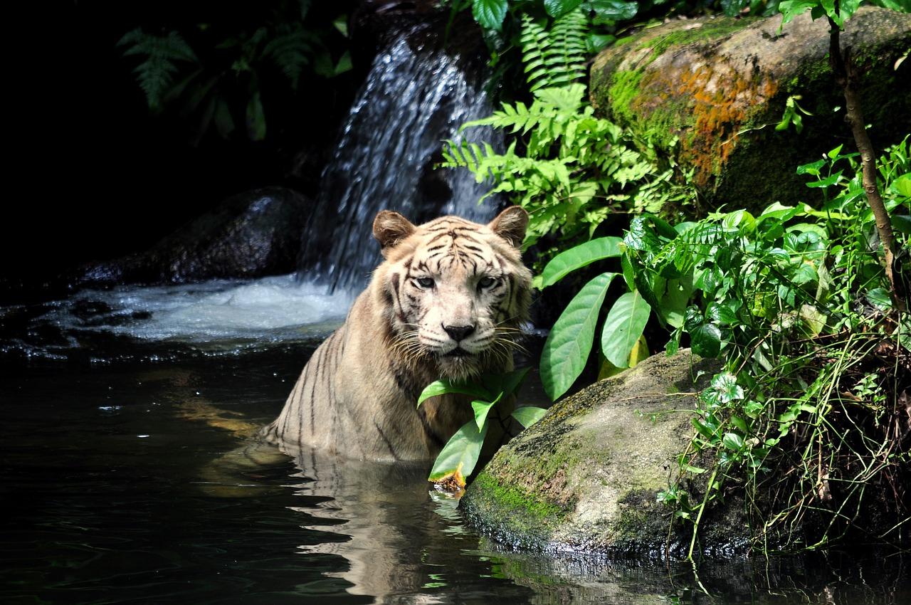 """Singapore Zoo"""