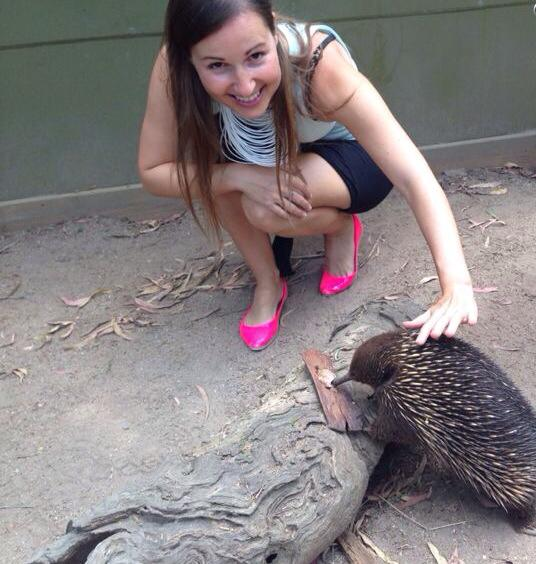 Echidna experience at Healesville, Australia